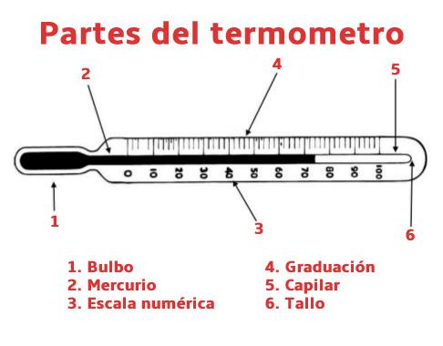 partes-del-termometro